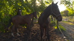 CLOSE UP: Curious young colts resting under big lush tree on horse farm Stock Footage