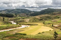 Rice paddy field scenery near Antananarivo, Antananarivo Province, Eastern Stock Photos