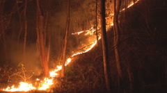 Forest ground fire line in tropical forest at night. Stock Footage