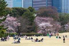 People relaxing and picnicking amongst the beautiful cherry blossom in Tokyo Stock Photos