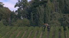 A mechanical vine harvester in the rows of vines. Stock Footage