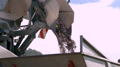Mechanical vine harvester: conveyor belt brings the fruit to a holding bin. Stock Footage
