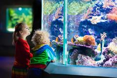 Kids watching fish in tropical aquarium Stock Photos