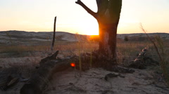 Burnt tree in the desert at sunset Stock Footage