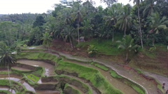 Rising Above Bali Indonesia Rice Terrace Stock Footage