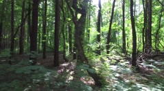 Camera movement of along deciduous forest with patches of light from sun Stock Footage