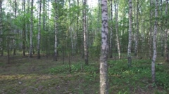 Movement among trunks of birch trees in wild woods Stock Footage