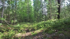 Movement on overgrown path cameras in trees blend into wild forest Stock Footage