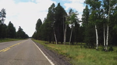 Front View Driving By Tall Pine And Birch Trees- Coconino National Forest- Fl Stock Footage