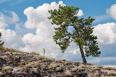 The tree on the slope. Stock Photos