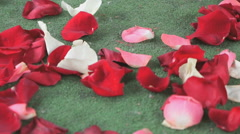 Red, white rose petals scattered on green carpet Stock Footage