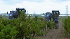 Harvesting Grapes in the Vineyards of the Crimea Stock Footage