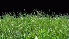 Beautiful low tiled grass shot, blowing on the wind isolated on alpha channel Stock Footage