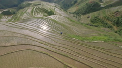 Aerial drone shot over green terraced rice paddy fields, China agriculture Stock Footage