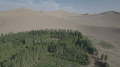Aerial drone shot green tree vineyards oasis stark desert landscape in China Stock Footage