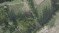 Overhead aerial view of vineyards and other agricultural fields in China Stock Footage