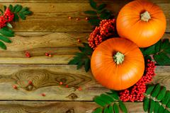 Thanksgiving background with pumpkins and rowan berries Stock Photos