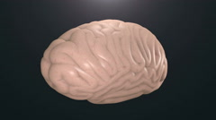 Human brain model. Stock Footage