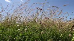 English Wildflower Meadow filmed at ground level Stock Footage