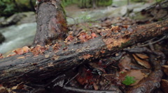 Lichen on a Wet Branch with Creek in Background Stock Footage