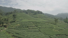 Aerial drone shot of green tea garden fields in Hangzhou, China Stock Footage