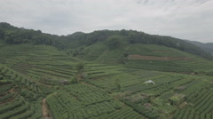 Aerial panning view of lush green tea fields in Hangzhou, China Stock Footage