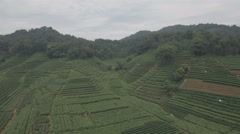 Aerial shot of tea gardens in Hangzhou, China Stock Footage