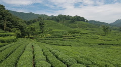 Flying low over a green tea plantation in Hangzhou, China. Stock Footage
