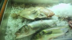 Big sea fish in the refrigerator of the seafood restaurant Stock Footage