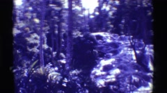 1971: a river or stream and whitewater rapids in a dense forest on either side Stock Footage