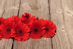 Red gerbera daisies clustered Stock Photos