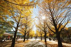 Autumn leaves in a city park Stock Photos
