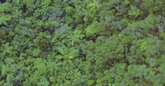 Aerial over native forest of palm trees in the coromandel peninsula, new zealand Stock Footage