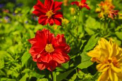 Diversity colorful flowers in the garden Stock Photos