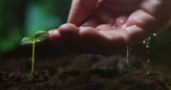 Macro of a young beautiful hand watering a plant in a romantic natural and magic Stock Footage