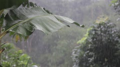 Tropical Downpour in the Jungle Stock Footage