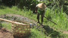 A Man Preparing the Rice Field For Planting Stock Footage