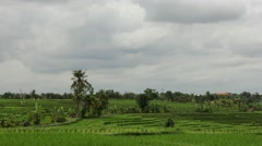 Taymlaps Clouds Over Rice Field Stock Footage