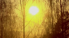 Sunset on the lake. Sunset reflected in water. Silhouettes of the trees Stock Footage