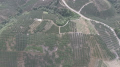 Overhead view of orange groves in a rural region in China Stock Footage