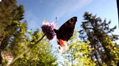 Butterfly in slow motion Stock Footage