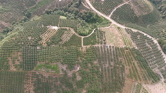 Overhead view of orange trees at a farm in rural China Stock Footage