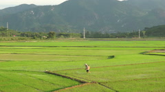 Asian man in triangular hats is watering a grass from cylinder on the Stock Footage