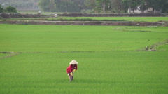 Asian woman in triangular hat is working with a chopper on the agricultural land Stock Footage