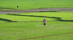 Asian man in triangular hat is watering a grass on the agricultural land of Stock Footage