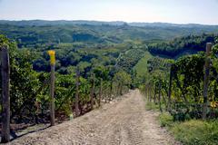 Vineyards, Nebbiolo, Langhe, Piedmont, Italy Stock Photos