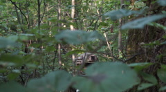 Military weapons are in the woods. The soldier is moving in the forest. Armed Stock Footage
