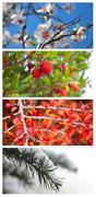 Four seasons  - collage Stock Photos