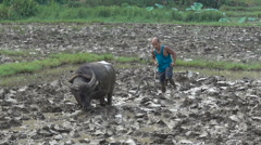 Farmer plows a paddy field with a buffalo, agriculture in rural China Stock Footage