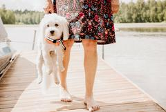 Woman carrying coton de tulear dog wearing life jacket on lake pier, Orivesi, Stock Photos